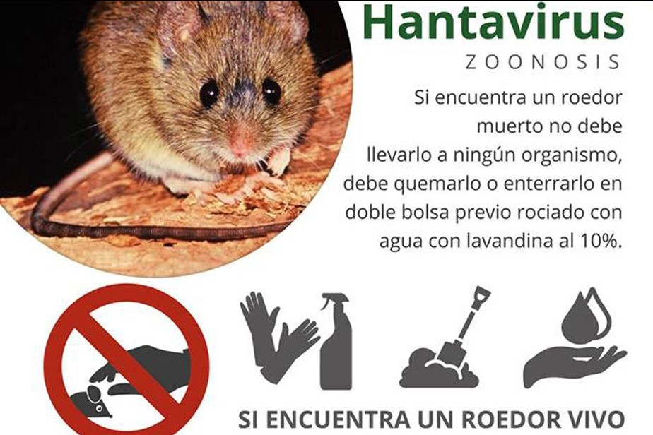 salud brinda recomendaciones para prevenir el hantavirus l nea sur noticias. Black Bedroom Furniture Sets. Home Design Ideas